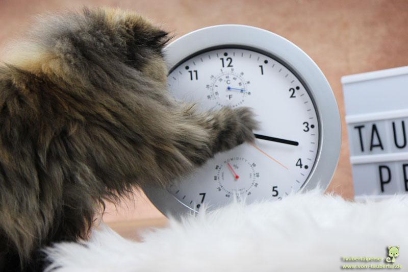 Zeitumstellung, Sommerzeit, Winterzeit, Taubertalperser, Katzenblog, Katzen, Zeit, Uhren