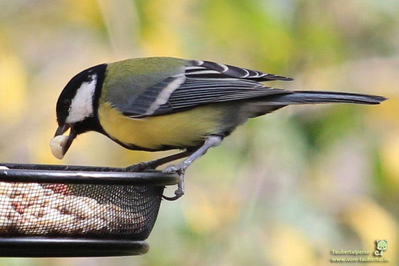 Vogelfutter, Vogelfutterstation, Taubertalpreser, Welzhöfer, Delicia, Wildvögel, Ganzjahresfütterung, Vogelfütterung