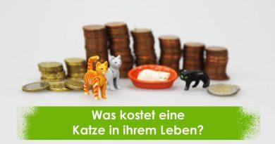 Was kostet eine Katze in ihrem Leben? Katzenleben, Katzenkosten, Taubertalperser, Katzen