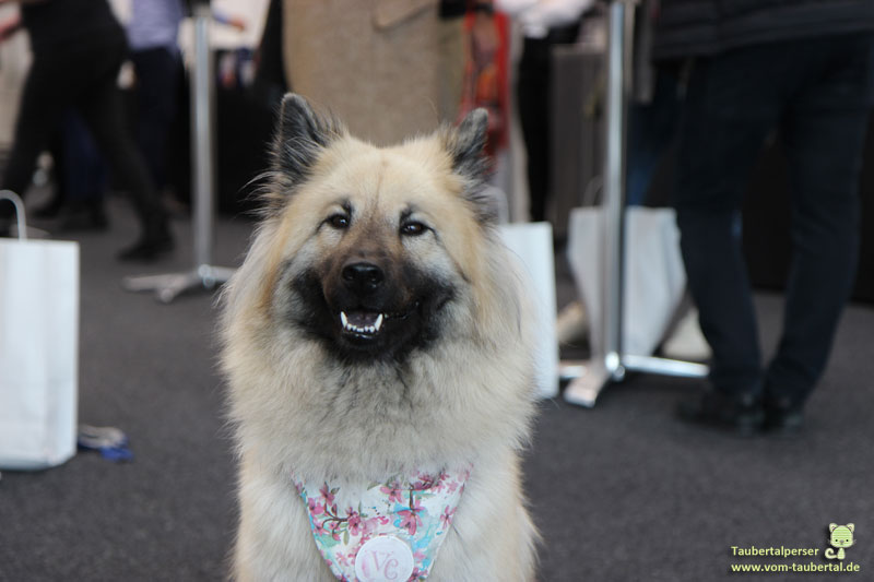 Petsummit, Amy, Eurasier, Taubertalperser, Petfluencer, Influencer
