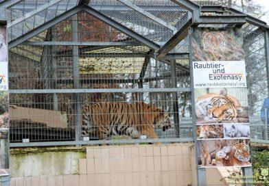 Raubkatzen- und Exotenasyl, Ansbach, Taubertalperser, unabhängiger Katzenblog