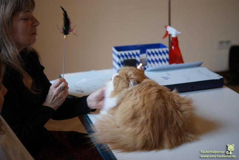 Dividi Katzenausstellung Taubertalperser