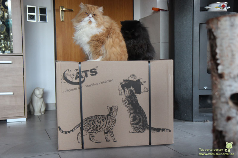 Rotho MyPet, Taubertalperser, unabhängiger Katzenblog, Transportkorb, faltbar, Reisen, Katzen unterwegs