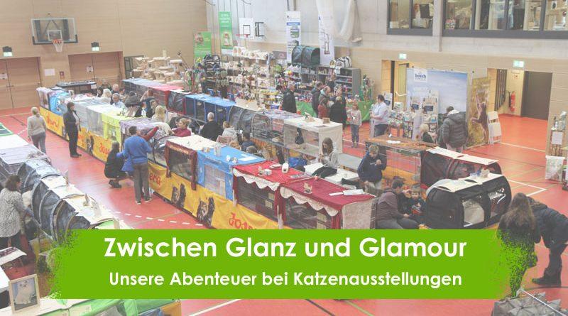 Katzenausstellungen, Erfahrungen, Glanz und Glamour, Taubertalperser, Katzenblog
