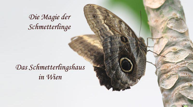 Schmetterlingshaus Wien, Taubertalperser