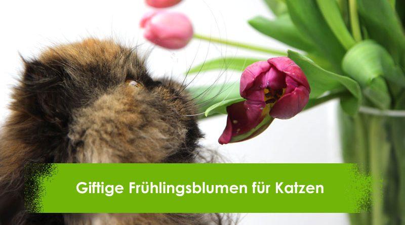 Giftige Frühlingsblumen