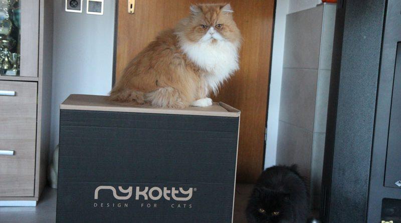 MyKotty Möbel für Katzen