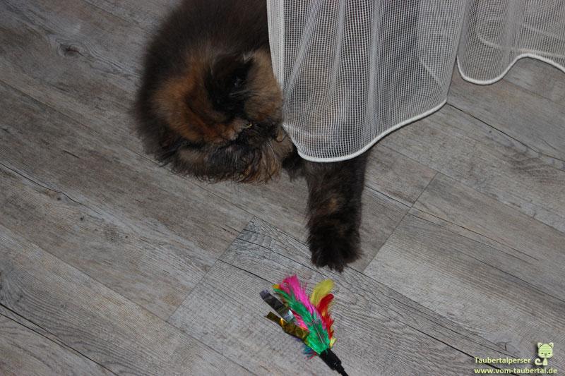 Khalessi, spielende Katze, Taubertalperser