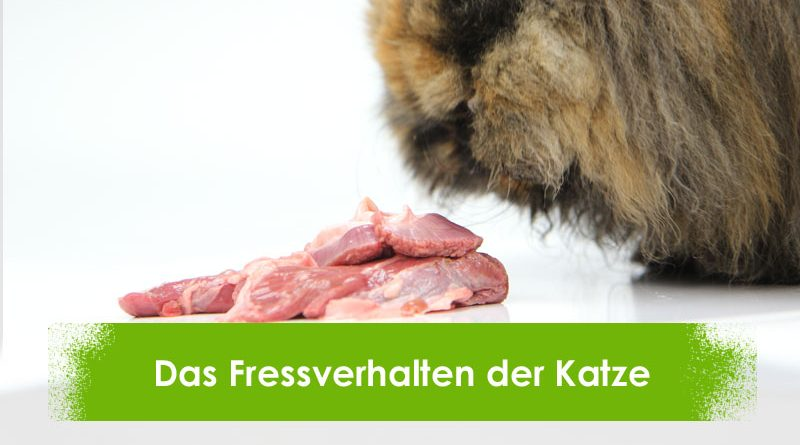 Katze, Fleisch, Fressverhalten, Taubertalperser, Infobeitrag