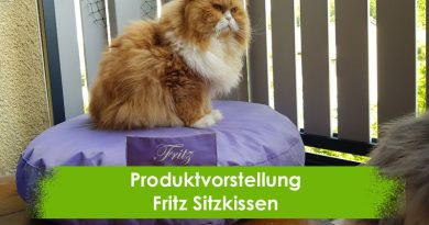 Fritz Sitzkissen, Taubertalperser, Katzenblog, Produktvorstellung, Katzeninformationsseite, Katzenbalkon