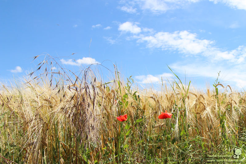 Felder, Getreide, Landwirtschaft