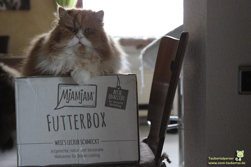 Mjamjam Futterbox, Dividi, Taubertalperser