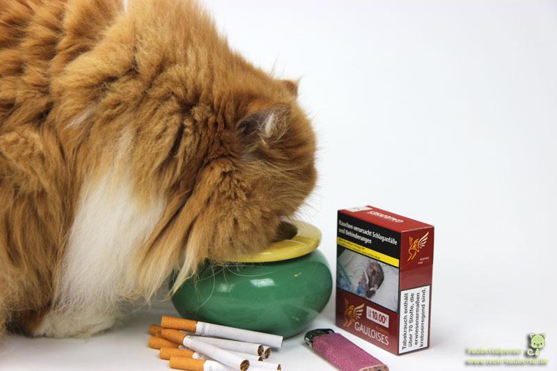 Nichtraucher, Taubertalperser, Passivrauchen