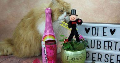 Happy Meow Day, Taubertalperser, Katzenfeiertag