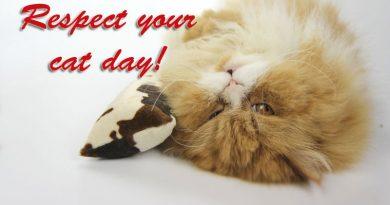 Respect your cat day, Taubertalperser, unabhängiger Katzenblog