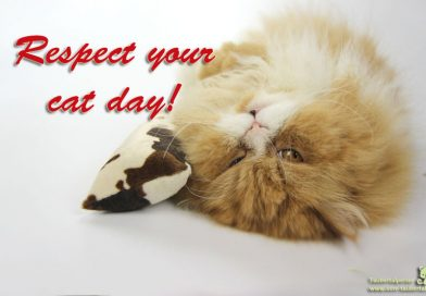Respect your cat day, Taubertalperser, unabhängiger Katzenblog