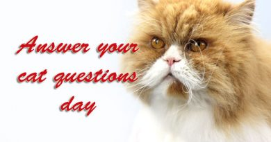 Answer your cat question day