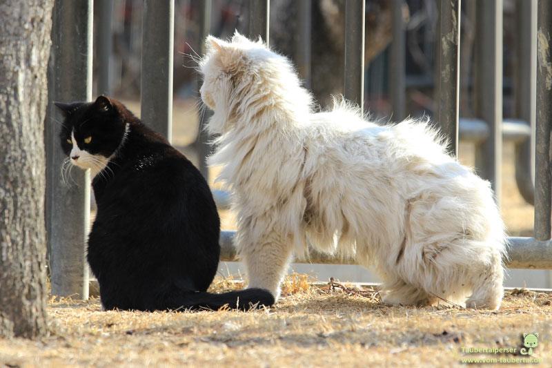 Zwei Katzen blicken nachdenklich in die Ferne