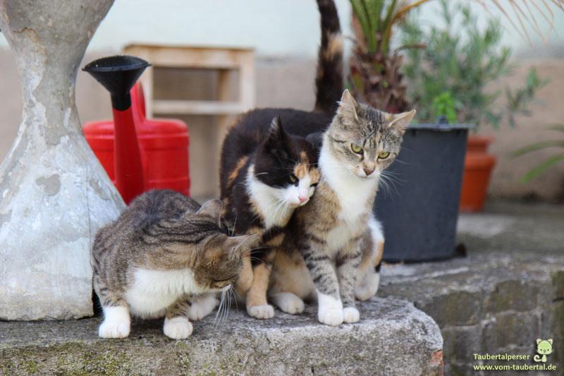 Mehrere Katzen in Dunzendorf