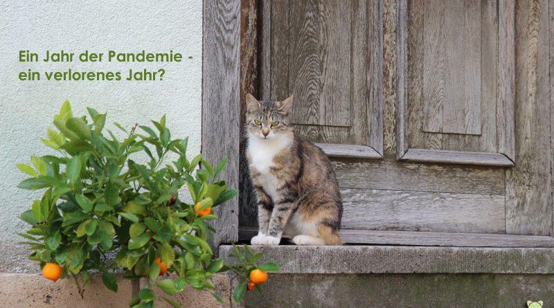 Katze vor Tür, Corona, Pandemie