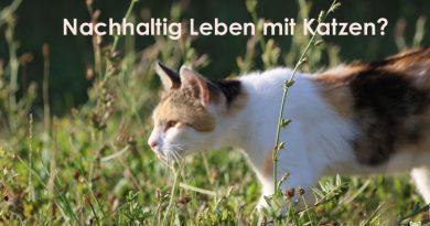 Nachhaltig leben mit Katze