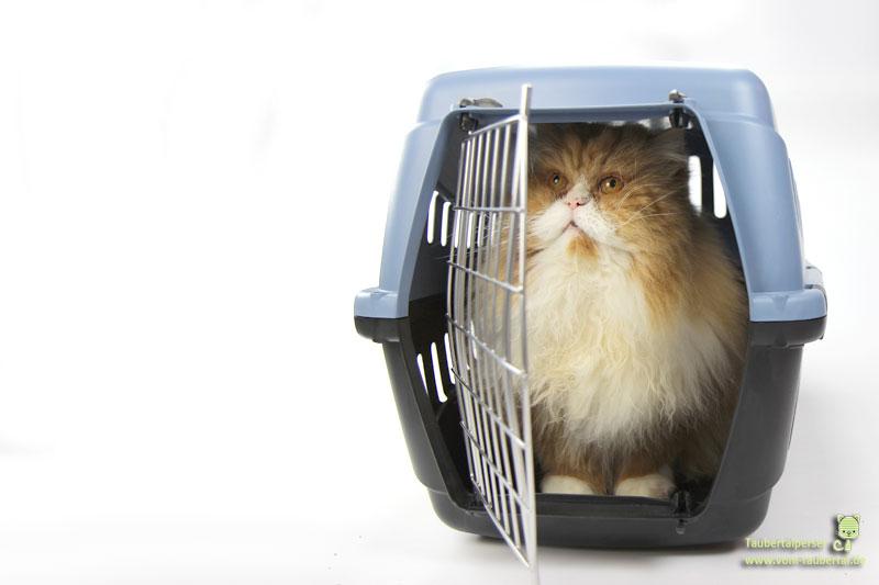 Transportkorb mit Katze sitzend, Taubertalperser