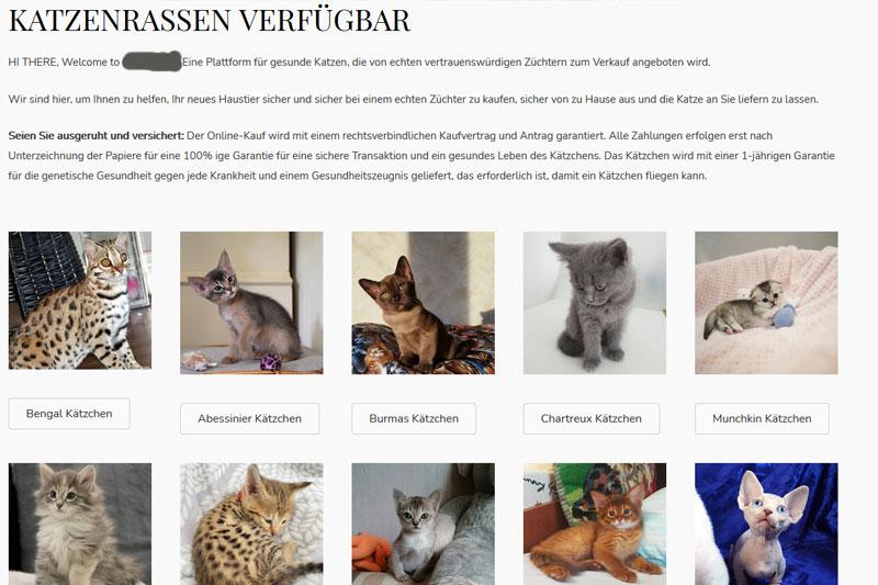 Kittenverkauf, unseriös, Tierhändler