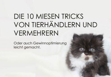 Kittenschwemme, unseriöse Praktiken beim Tierhandel
