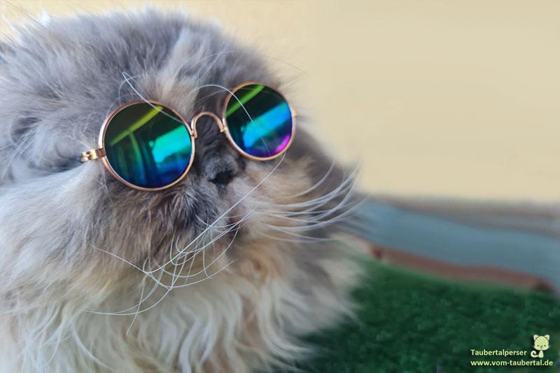 Zwetschke mit Sonnenbrille