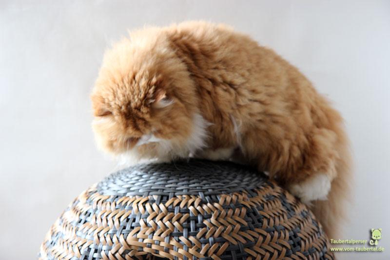 Haustierkorb Dividi Katze