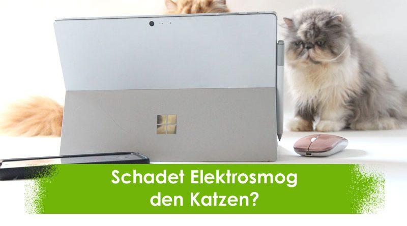 Elektrosmog Katzen