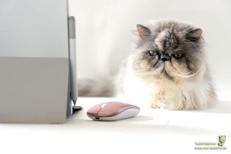 Katze Laptop Elektrosmog