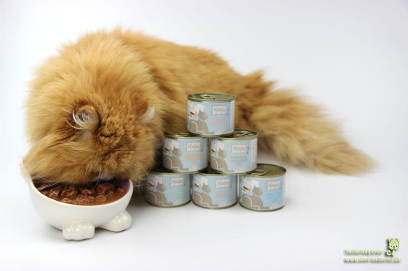 Katze am Futternapf Taubertaperser
