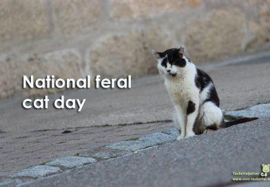 National feral Cat Day, verwilderte Hauskatze